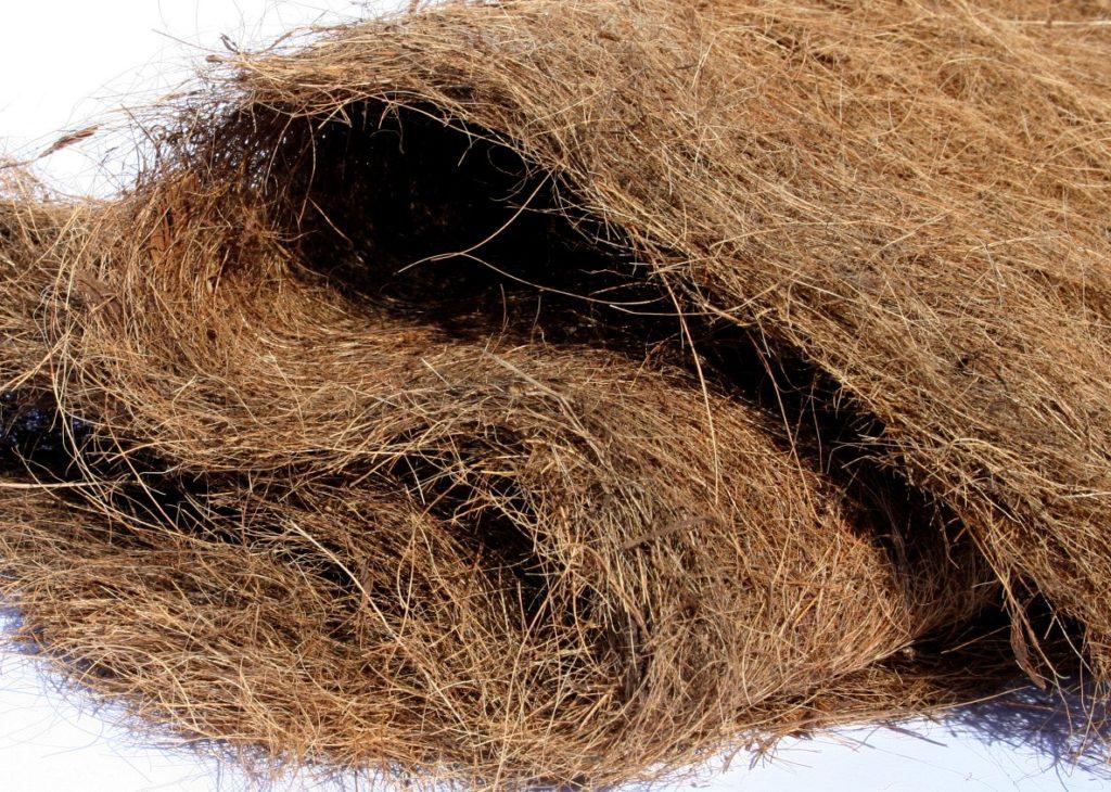 Кокосовое волокно фотография