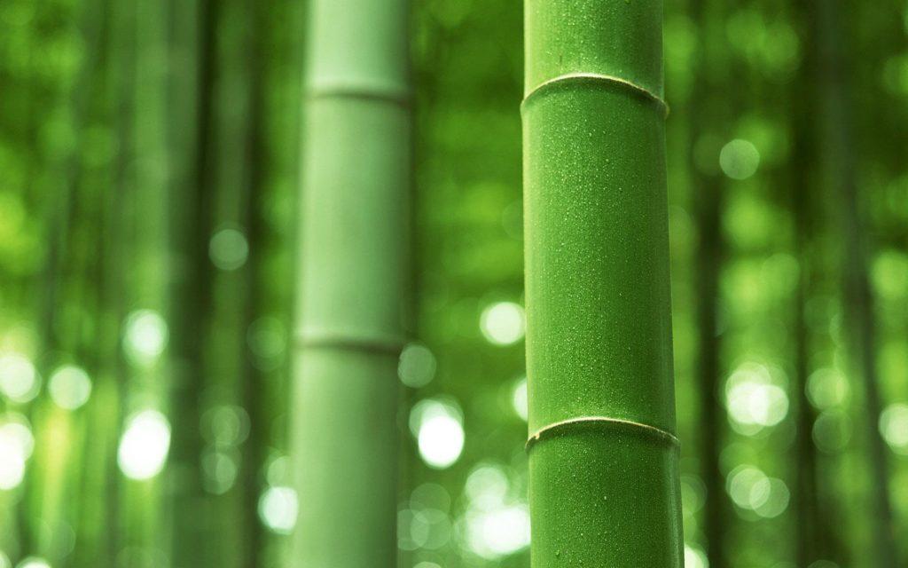 Зеленый бамбук фото