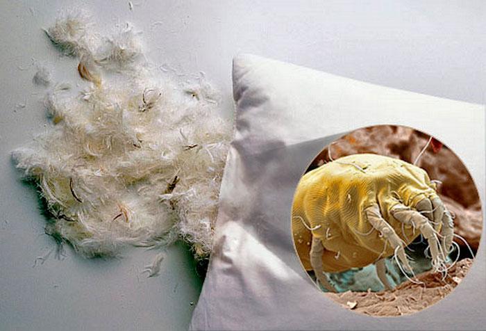 Пылевые клещи в подушке